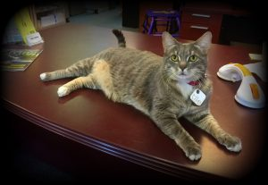 Northeast Mobility Center Tobias Toby the Cat